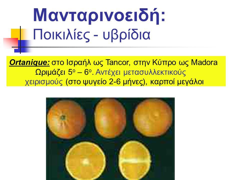 Μανταρινοειδή: Ποικιλίες - υβρίδια Ortanique: στο Ισραήλ ως Tancor, στην Κύπρο ως Madora Ωριμάζει 5 ο – 6 ο. Αντέχει μετασυλλεκτικούς χειρισμούς (στο