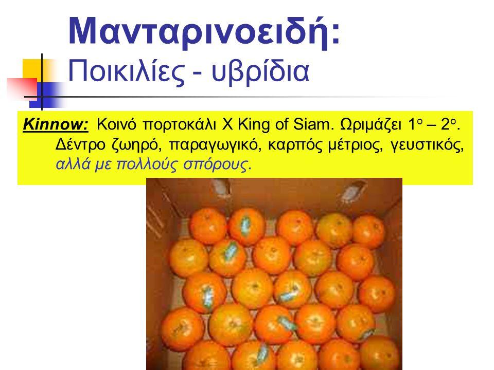Kinnow: Κοινό πορτοκάλι X King of Siam. Ωριμάζει 1 ο – 2 ο. Δέντρο ζωηρό, παραγωγικό, καρπός μέτριος, γευστικός, αλλά με πολλούς σπόρους. Μανταρινοειδ