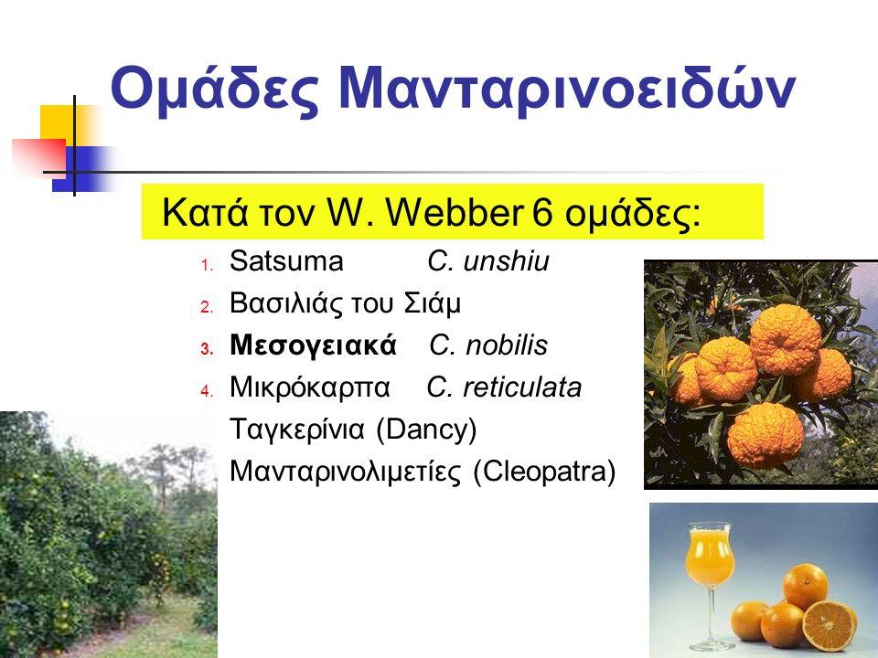 Ομάδες Μανταρινοειδών Κατά τον W. Webber 6 ομάδες: 1. Satsuma C. unshiu 2. Βασιλιάς του Σιάμ 3. Μεσογειακά C. nobilis 4. Μικρόκαρπα C. reticulata 5. Τ