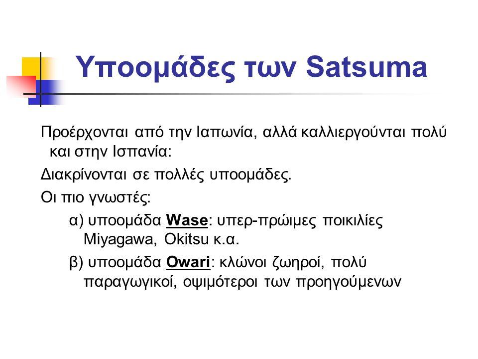 Υποομάδες των Satsuma Προέρχονται από την Ιαπωνία, αλλά καλλιεργούνται πολύ και στην Ισπανία: Διακρίνονται σε πολλές υποομάδες. Οι πιο γνωστές: α) υπο
