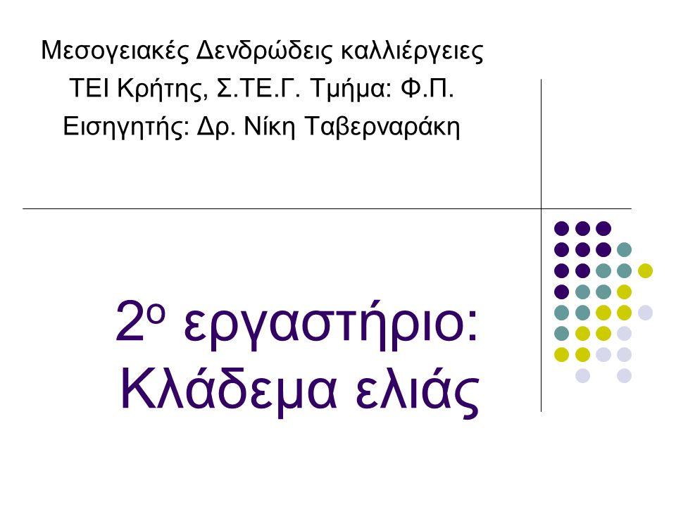 2 ο εργαστήριο: Κλάδεμα ελιάς Μεσογειακές Δενδρώδεις καλλιέργειες ΤΕΙ Κρήτης, Σ.ΤΕ.Γ.