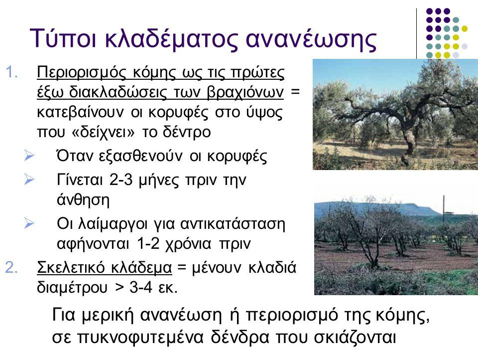 Τύποι κλαδέματος ανανέωσης 1.Περιορισμός κόμης ως τις πρώτες έξω διακλαδώσεις των βραχιόνων = κατεβαίνουν οι κορυφές στο ύψος που «δείχνει» το δέντρο  Όταν εξασθενούν οι κορυφές  Γίνεται 2-3 μήνες πριν την άνθηση  Οι λαίμαργοι για αντικατάσταση αφήνονται 1-2 χρόνια πριν 2.Σκελετικό κλάδεμα = μένουν κλαδιά διαμέτρου > 3-4 εκ.