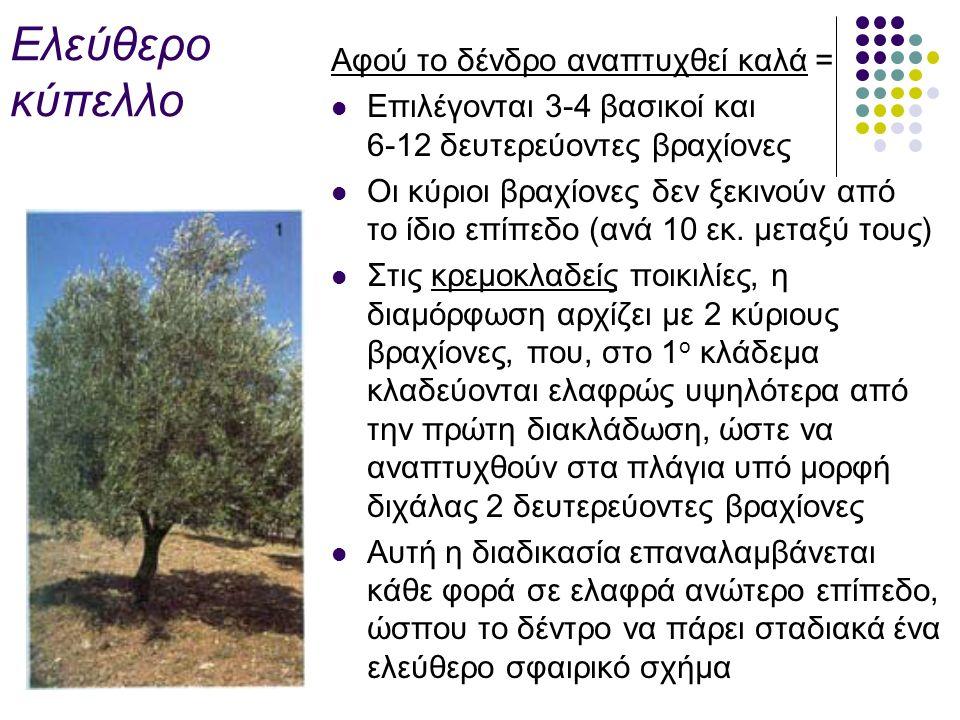 Ελεύθερο κύπελλο Αφού το δένδρο αναπτυχθεί καλά = Επιλέγονται 3-4 βασικοί και 6-12 δευτερεύοντες βραχίονες Οι κύριοι βραχίονες δεν ξεκινούν από το ίδιο επίπεδο (ανά 10 εκ.