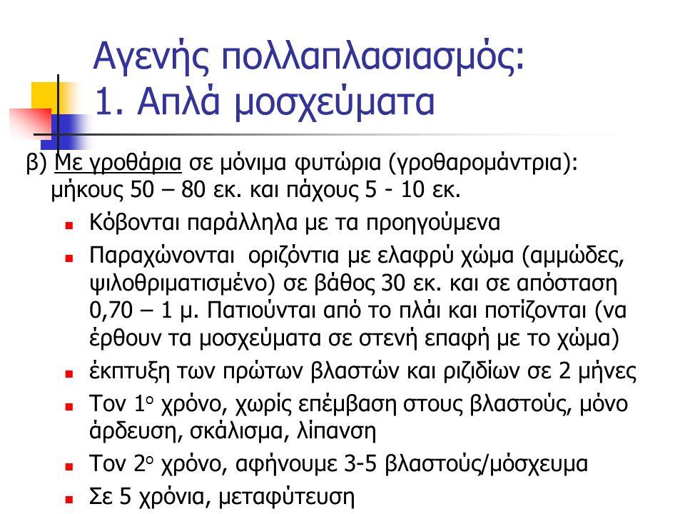 β) Με γροθάρια σε μόνιμα φυτώρια (γροθαρομάντρια): μήκους 50 – 80 εκ. και πάχους 5 - 10 εκ. Κόβονται παράλληλα με τα προηγούμενα Παραχώνονται οριζόντι