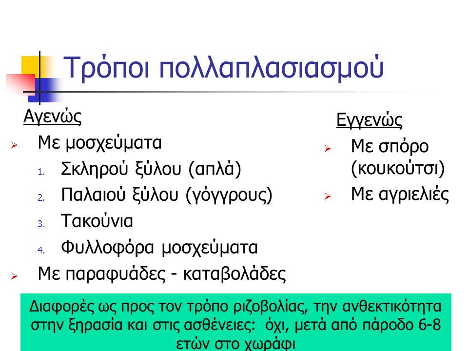 β) Με γροθάρια σε μόνιμα φυτώρια (γροθαρομάντρια): μήκους 50 – 80 εκ.