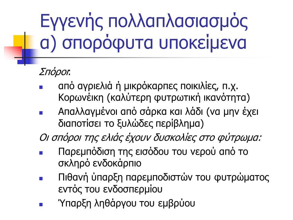 Εγγενής πολλαπλασιασμός α) σπορόφυτα υποκείμενα Σπόροι: από αγριελιά ή μικρόκαρπες ποικιλίες, π.χ. Κορωνέικη (καλύτερη φυτρωτική ικανότητα) Απαλλαγμέν