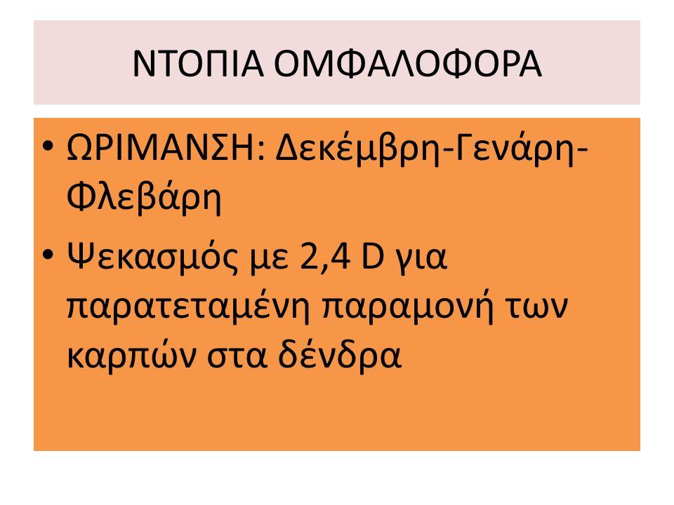 ΝΤΟΠΙΑ ΟΜΦΑΛΟΦΟΡΑ ΩΡΙΜΑΝΣΗ: Δεκέμβρη-Γενάρη- Φλεβάρη Ψεκασμός με 2,4 D για παρατεταμένη παραμονή των καρπών στα δένδρα