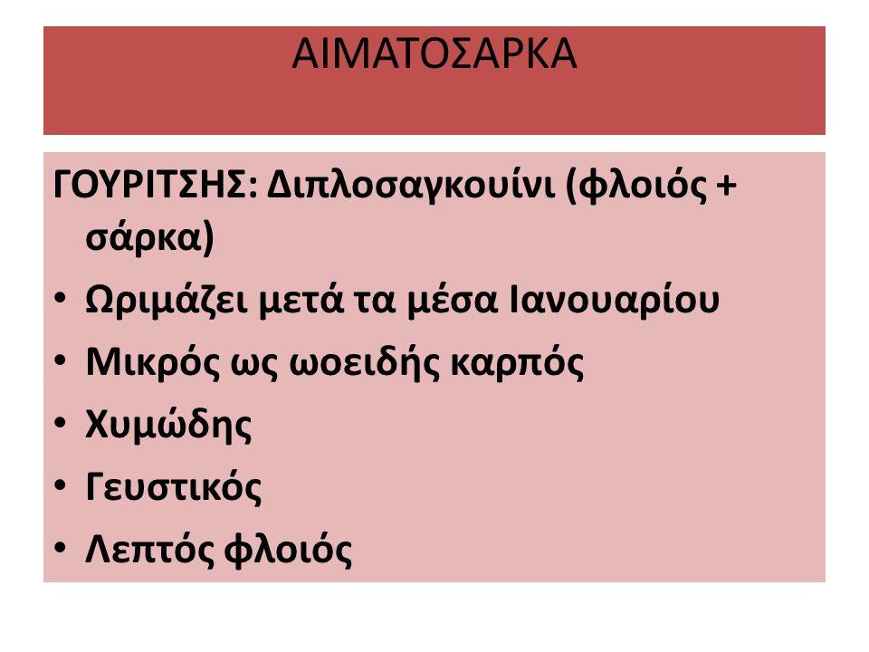 ΑΙΜΑΤΟΣΑΡΚΑ ΓΟΥΡΙΤΣΗΣ: Διπλοσαγκουίνι (φλοιός + σάρκα) Ωριμάζει μετά τα μέσα Ιανουαρίου Μικρός ως ωοειδής καρπός Χυμώδης Γευστικός Λεπτός φλοιός