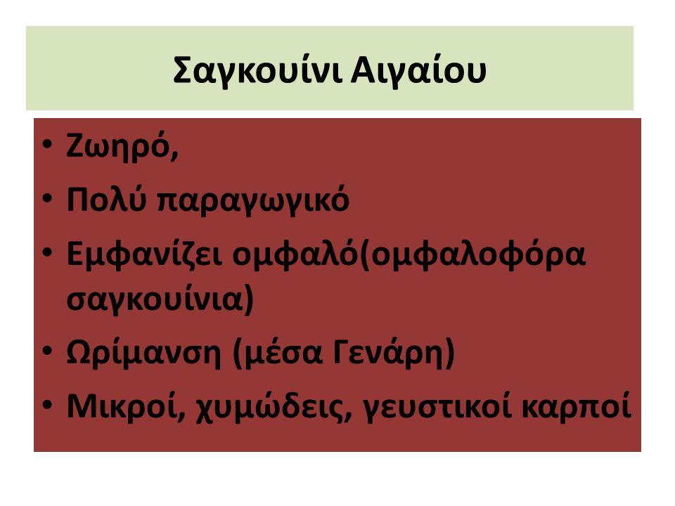 Σαγκουίνι Αιγαίου Ζωηρό, Πολύ παραγωγικό Εμφανίζει ομφαλό(ομφαλοφόρα σαγκουίνια) Ωρίμανση (μέσα Γενάρη) Μικροί, χυμώδεις, γευστικοί καρποί