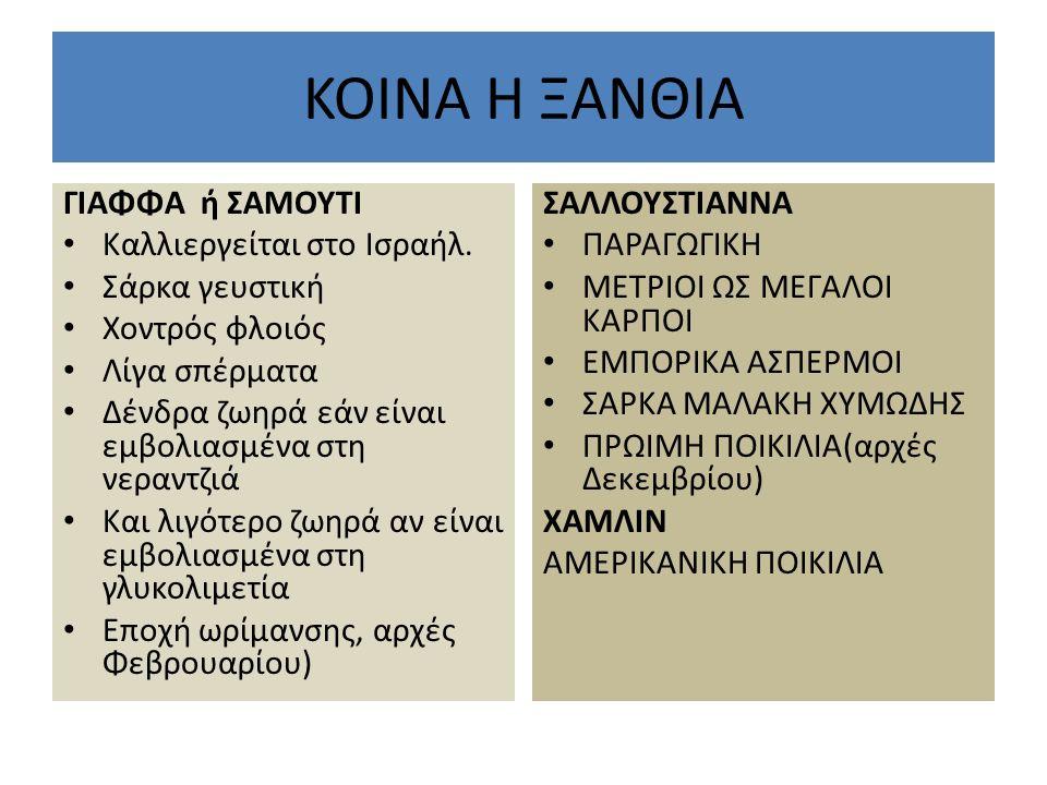 KOINA H ΞΑΝΘΙΑ ΓΙΑΦΦΑ ή ΣΑΜΟΥΤΙ Καλλιεργείται στο Ισραήλ. Σάρκα γευστική Χοντρός φλοιός Λίγα σπέρματα Δένδρα ζωηρά εάν είναι εμβολιασμένα στη νεραντζι