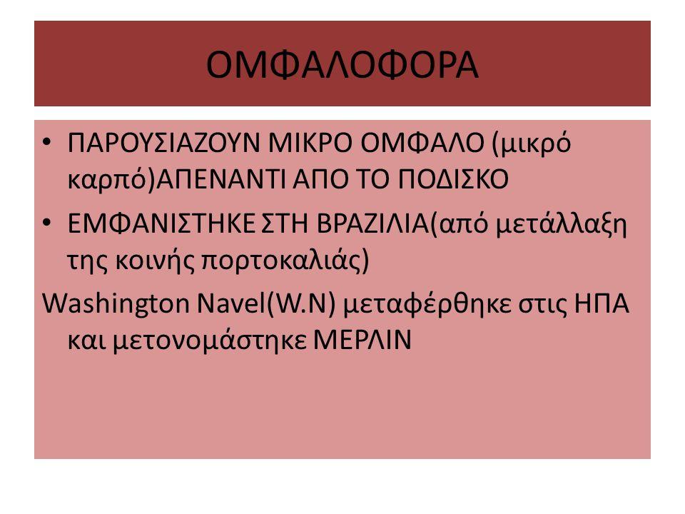 ΟΜΦΑΛΟΦΟΡΑ ΠΑΡΟΥΣΙΑΖΟΥΝ ΜΙΚΡΟ ΟΜΦΑΛΟ (μικρό καρπό)ΑΠΕΝΑΝΤΙ ΑΠO ΤΟ ΠΟΔΙΣΚΟ ΕΜΦΑΝΙΣΤΗΚΕ ΣΤΗ ΒΡΑΖΙΛΙΑ(από μετάλλαξη της κοινής πορτοκαλιάς) Washington Navel(W.N) μεταφέρθηκε στις ΗΠΑ και μετονομάστηκε ΜΕΡΛΙΝ