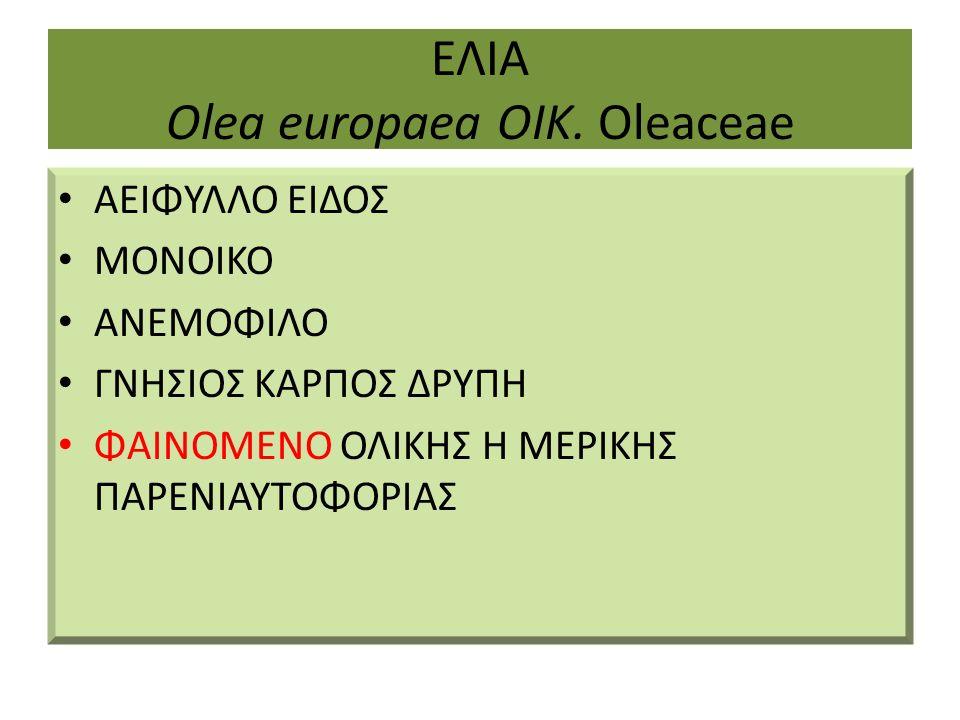 ΕΛΙΑ Olea europaea ΟΙΚ.