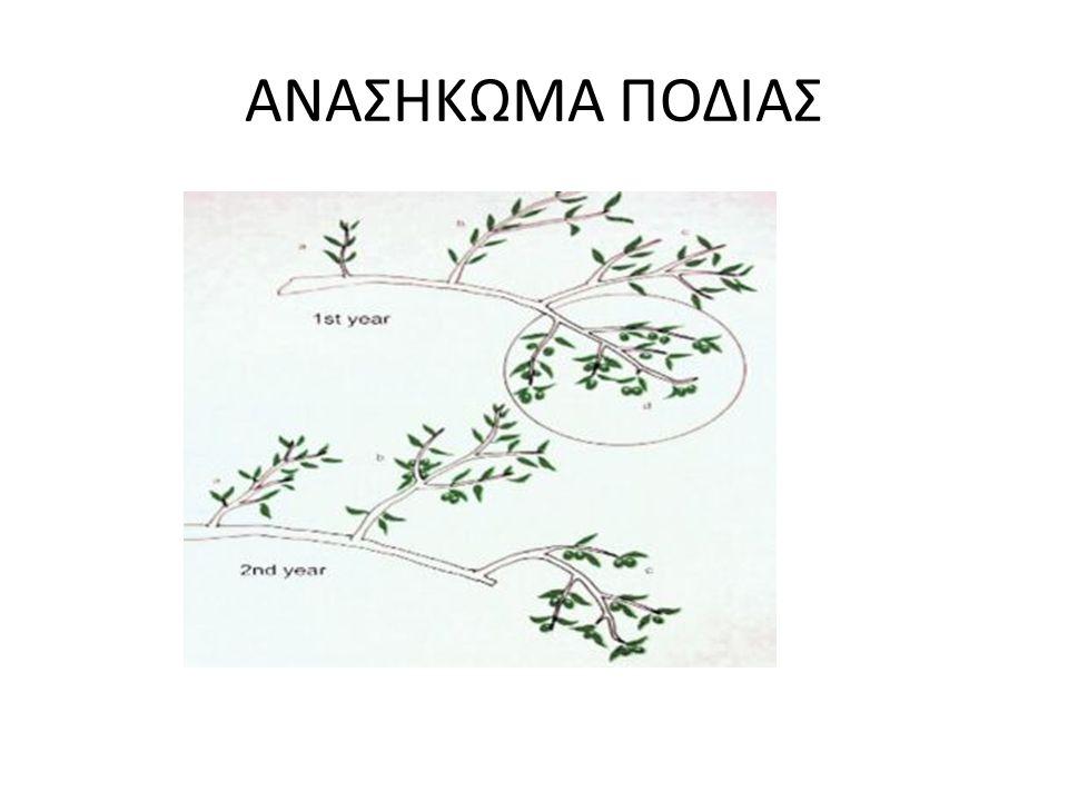 ΑΝΑΣΗΚΩΜΑ ΠΟΔΙΑΣ