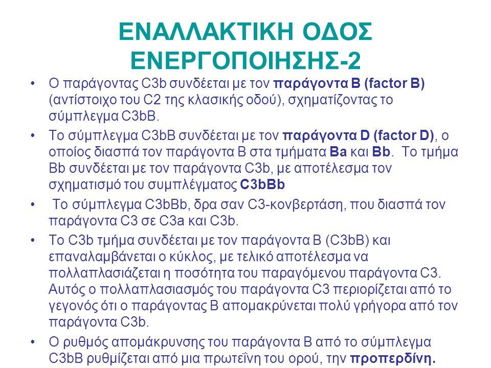 ΕΝΑΛΛΑΚΤΙΚΗ ΟΔΟΣ ΕΝΕΡΓΟΠΟΙΗΣΗΣ-2 Ο παράγοντας C3b συνδέεται με τον παράγοντα Β (factor B) (αντίστοιχο του C2 της κλασικής οδού), σχηματίζοντας το σύμπλεγμα C3bB.