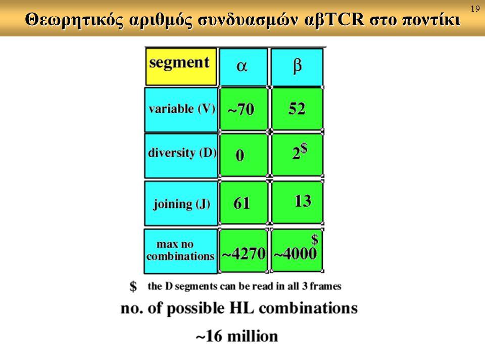Θεωρητικός αριθμός συνδυασμών αβTCR στο ποντίκι 19