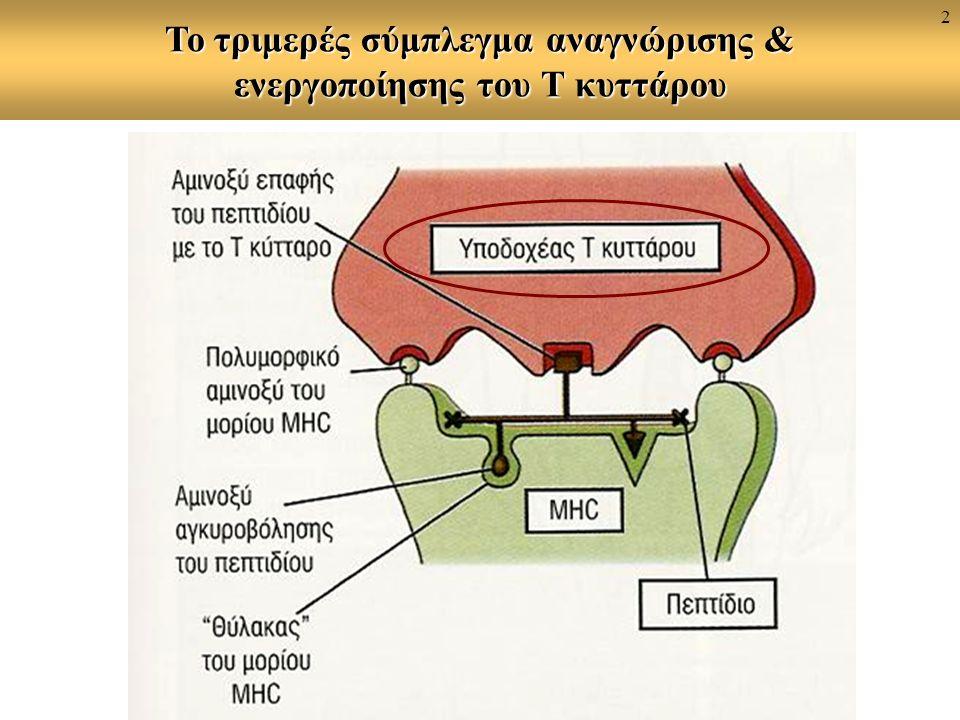 Το τριμερές σύμπλεγμα αναγνώρισης & ενεργοποίησης του Τ κυττάρου 2