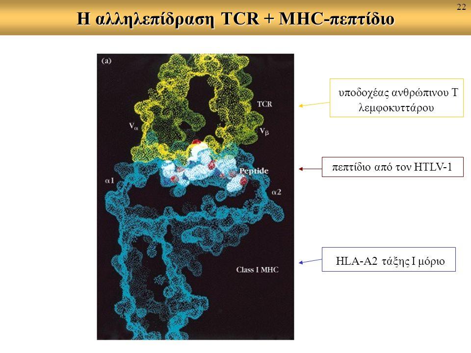 Η αλληλεπίδραση TCR + MHC-πεπτίδιο υποδοχέας ανθρώπινου Τ λεμφοκυττάρου πεπτίδιο από τον HTLV-1 HLA-A2 τάξης Ι μόριο 22