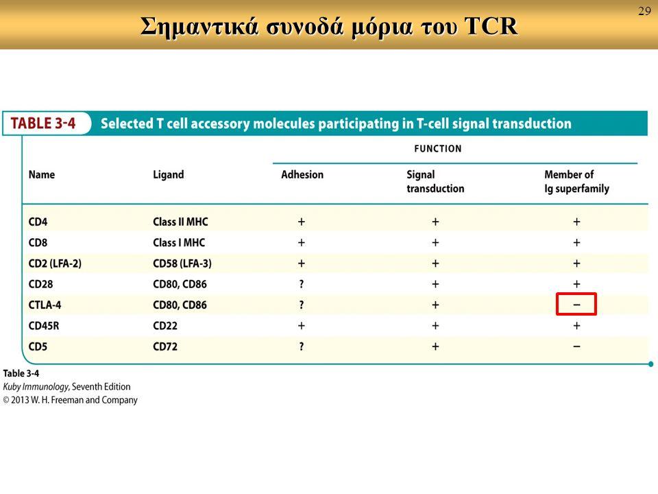Σημαντικά συνοδά μόρια του TCR 29