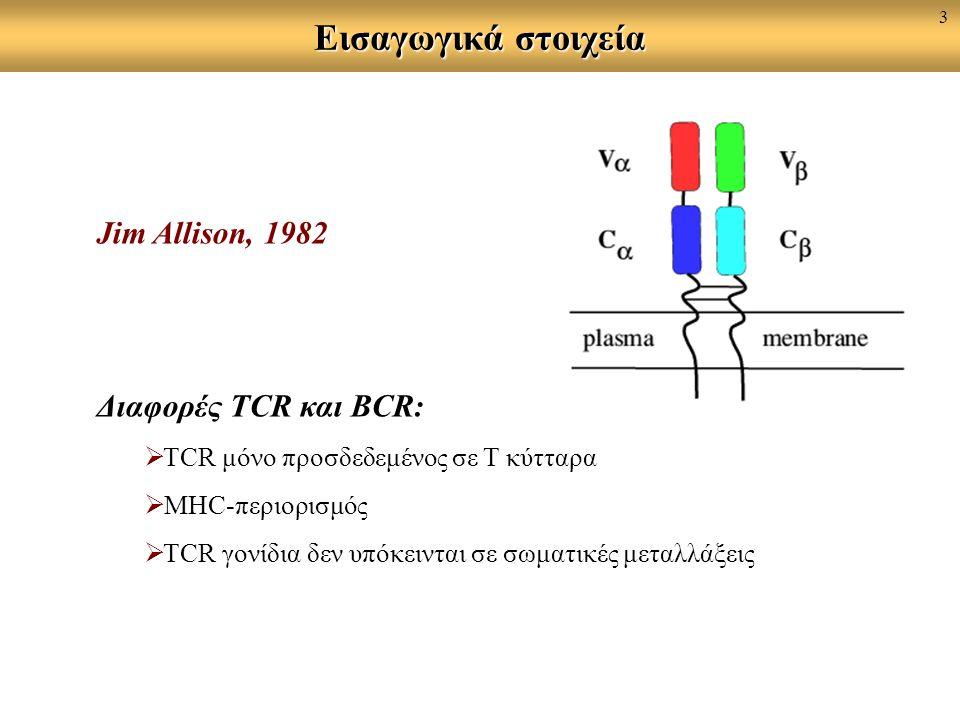 Εισαγωγικά στοιχεία Jim Allison, 1982 Διαφορές TCR και BCR:  ΤCR μόνο προσδεδεμένος σε Τ κύτταρα  MHC-περιορισμός  TCR γονίδια δεν υπόκεινται σε σωματικές μεταλλάξεις 3