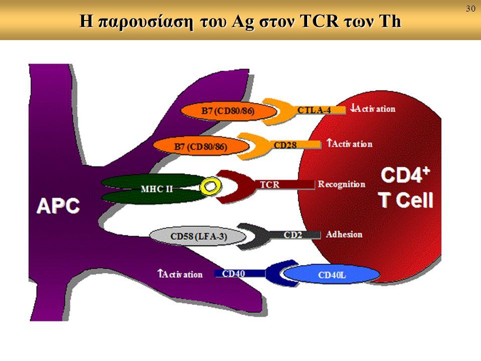 Η παρουσίαση του Ag στον TCR των Th 30