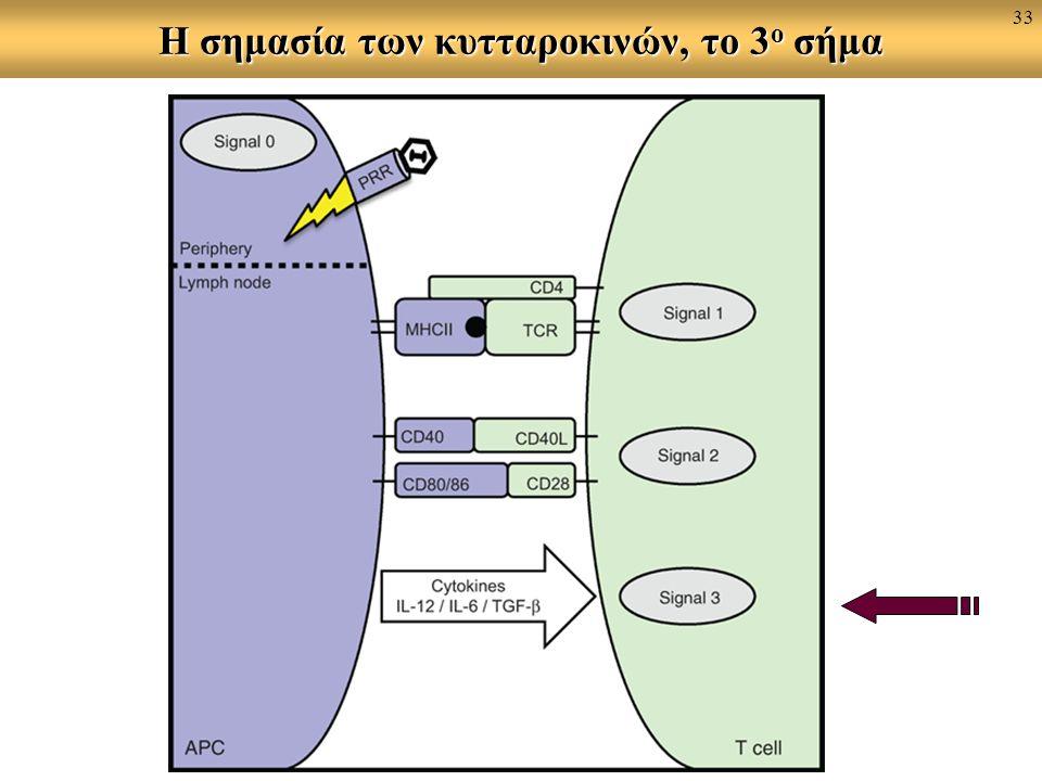 Η σημασία των κυτταροκινών, το 3 ο σήμα 33