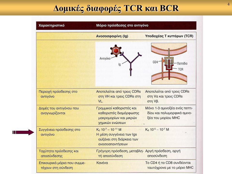 Δομικές διαφορές TCR και BCR 4