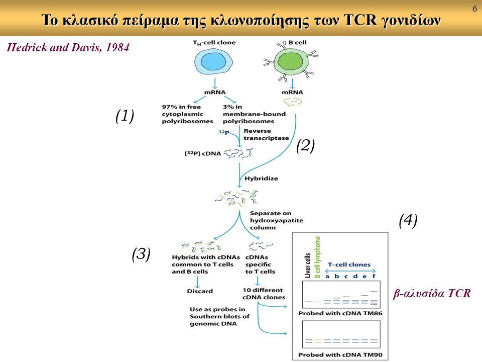 Το κλασικό πείραμα της κλωνοποίησης των TCR γονιδίων (1) (3) (4) (2) Hedrick and Davis, 1984 β-αλυσίδα TCR 6