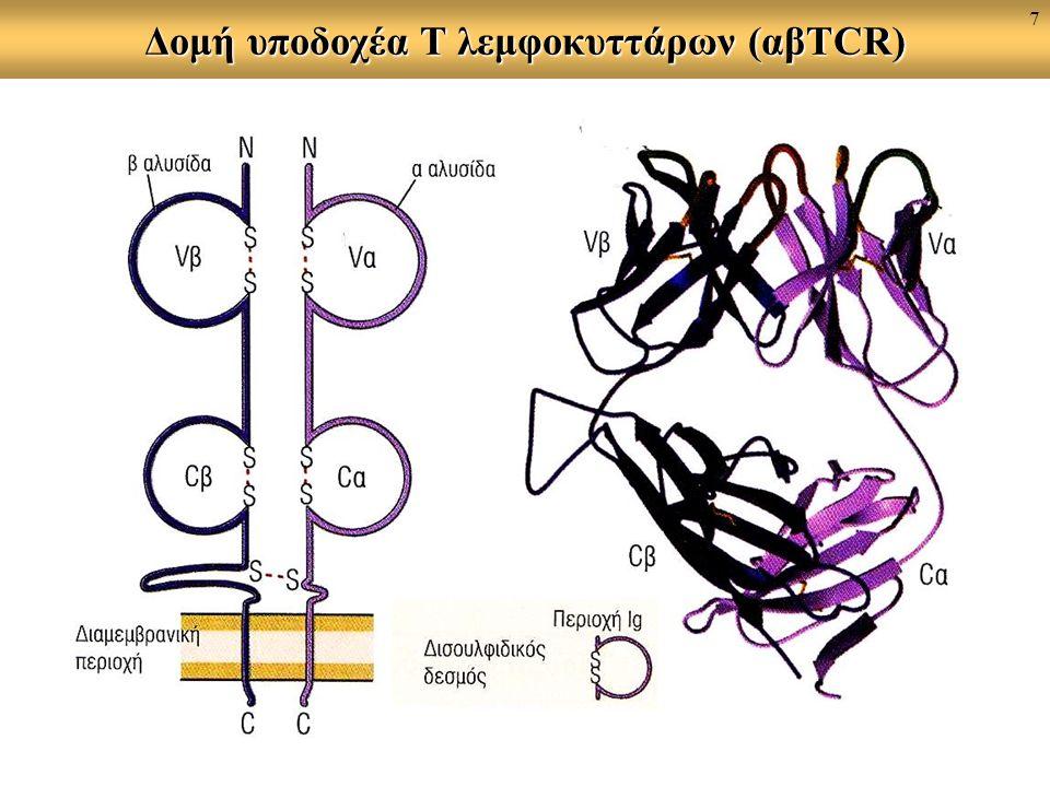 Δομή υποδοχέα T λεμφοκυττάρων (αβTCR) 7