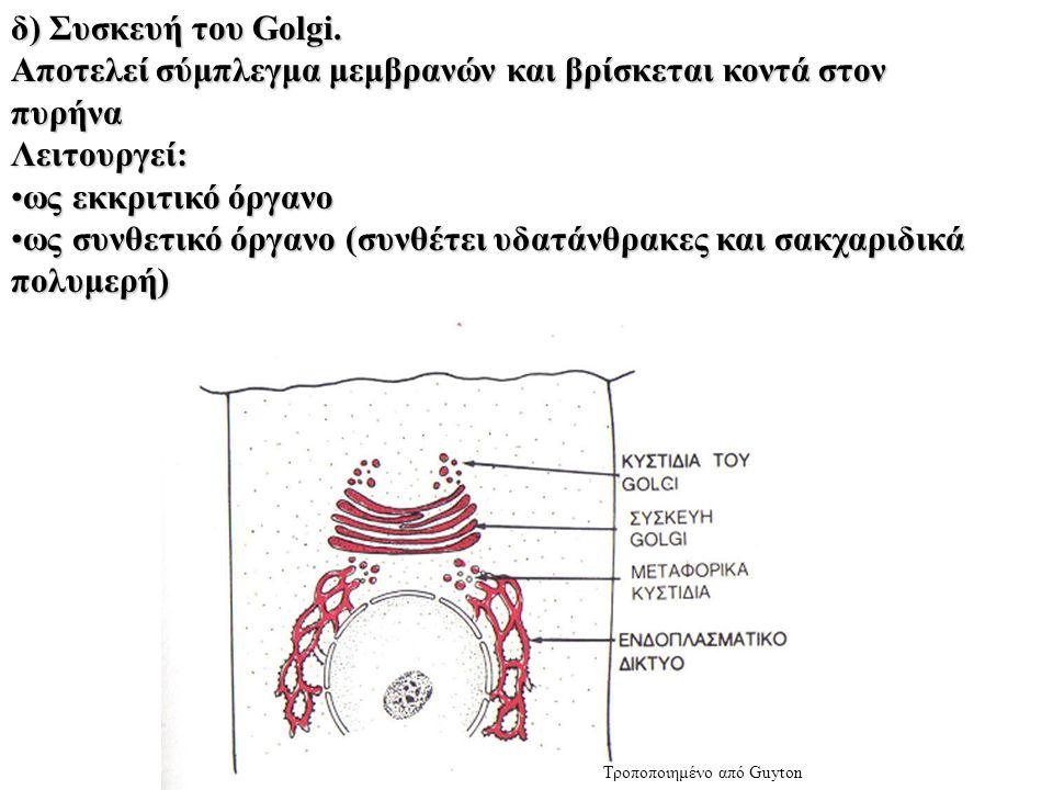 δ) Συσκευή του Golgi.