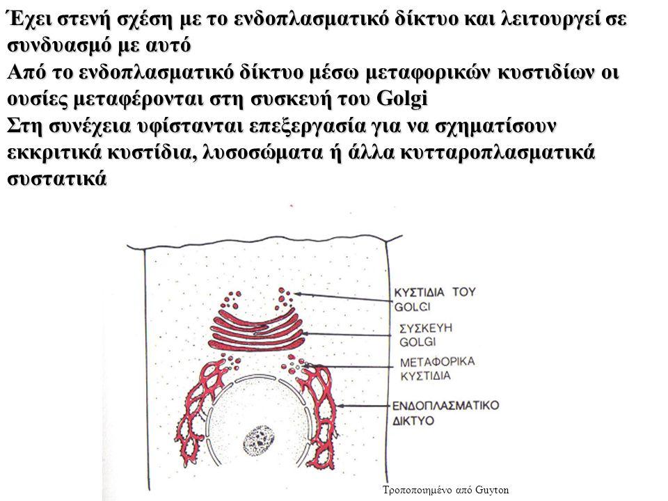 Έχει στενή σχέση με το ενδοπλασματικό δίκτυο και λειτουργεί σε συνδυασμό με αυτό Από το ενδοπλασματικό δίκτυο μέσω μεταφορικών κυστιδίων οι ουσίες μεταφέρονται στη συσκευή του Golgi Στη συνέχεια υφίστανται επεξεργασία για να σχηματίσουν εκκριτικά κυστίδια, λυσοσώματα ή άλλα κυτταροπλασματικά συστατικά Τροποποιημένο από Guyton