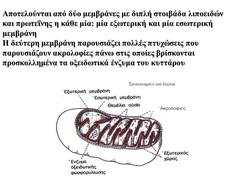 Αποτελούνται από δύο μεμβράνες με διπλή στοιβάδα λιποειδών και πρωτεΐνης η κάθε μία: μία εξωτερική και μία εσωτερική μεμβράνη Η δεύτερη μεμβράνη παρουσιάζει πολλές πτυχώσεις που παρουσιάζουν ακρολοφίες πάνω στις οποίες βρίσκονται προσκολλημένα τα οξειδωτικά ένζυμα του κυττάρου Τροποποιημένο από Guyton