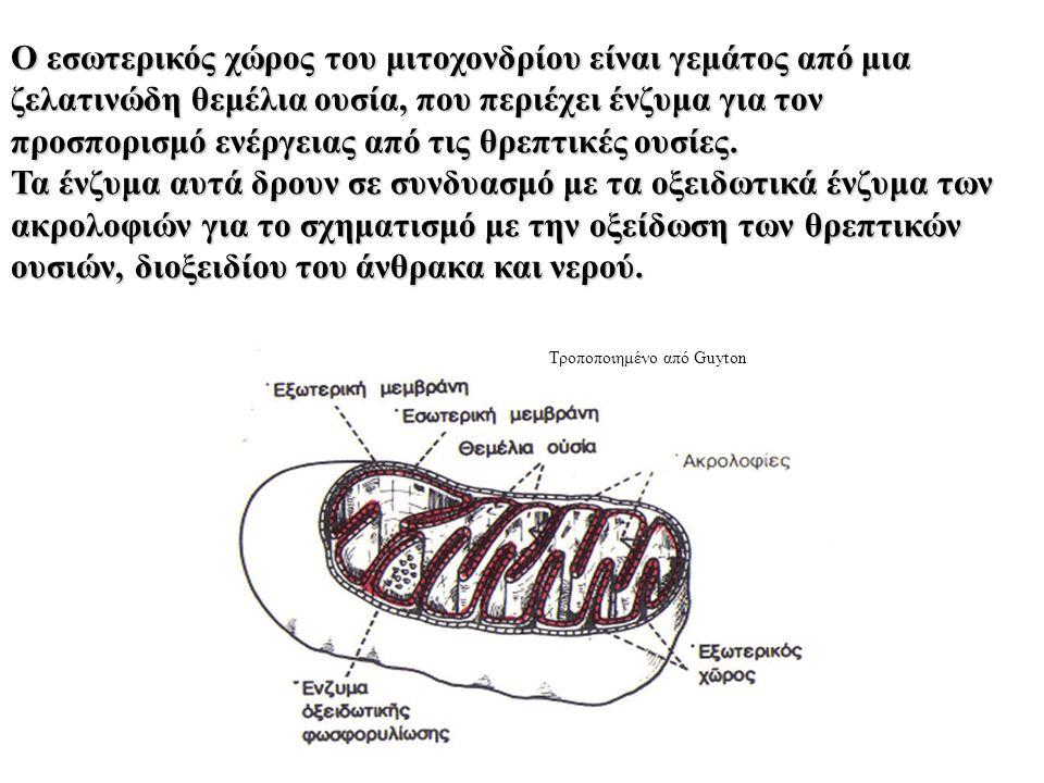 Ο εσωτερικός χώρος του μιτοχονδρίου είναι γεμάτος από μια ζελατινώδη θεμέλια ουσία, που περιέχει ένζυμα για τον προσπορισμό ενέργειας από τις θρεπτικές ουσίες.