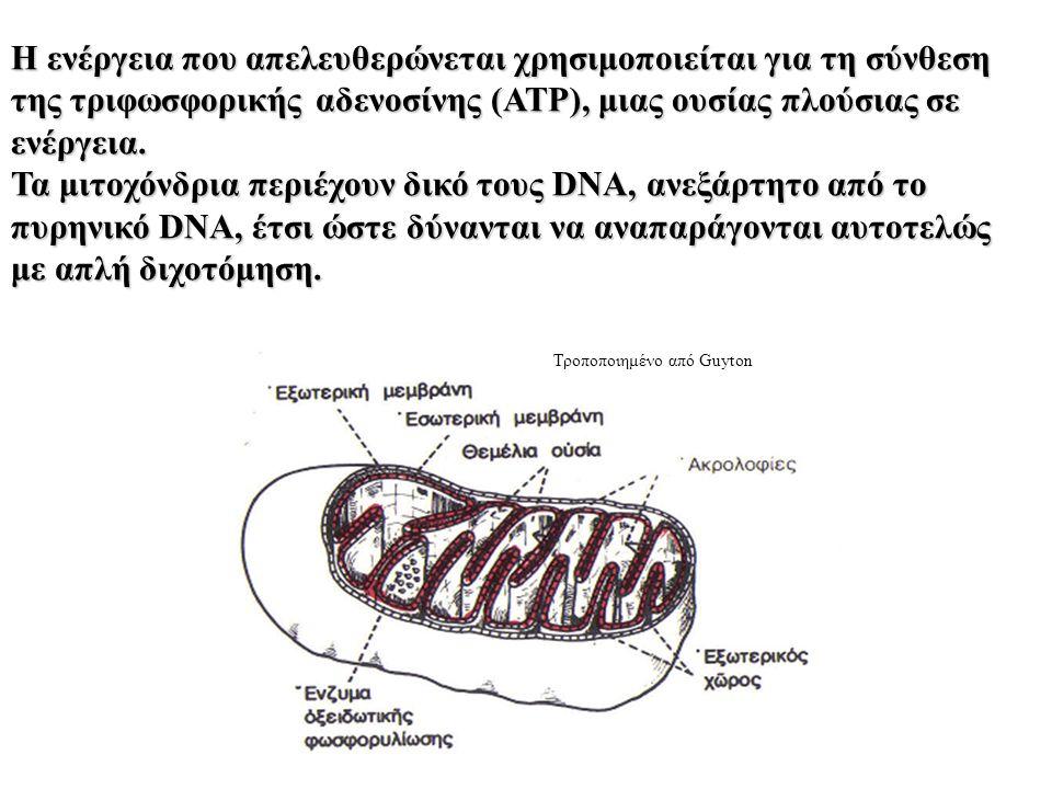 Η ενέργεια που απελευθερώνεται χρησιμοποιείται για τη σύνθεση της τριφωσφορικής αδενοσίνης (ΑΤΡ), μιας ουσίας πλούσιας σε ενέργεια.
