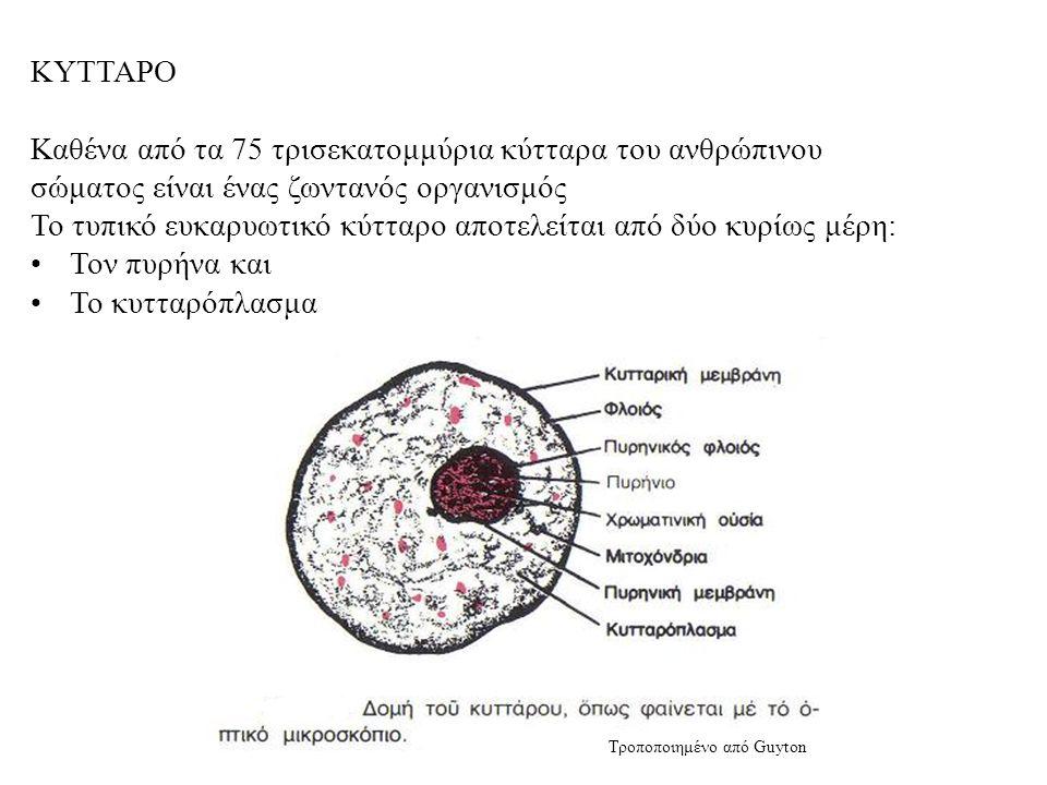 ΚΥΤΤΑΡΟ Καθένα από τα 75 τρισεκατομμύρια κύτταρα του ανθρώπινου σώματος είναι ένας ζωντανός οργανισμός Το τυπικό ευκαρυωτικό κύτταρο αποτελείται από δύο κυρίως μέρη: Τον πυρήνα και Το κυτταρόπλασμα Τροποποιημένο από Guyton