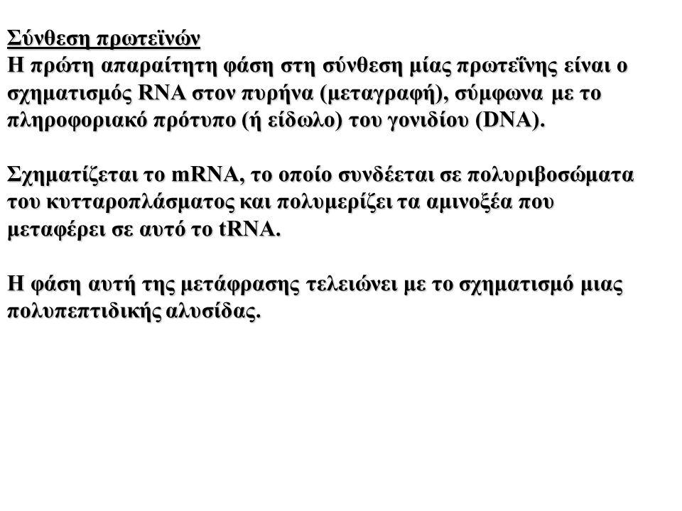 Σύνθεση πρωτεϊνών Η πρώτη απαραίτητη φάση στη σύνθεση μίας πρωτεΐνης είναι ο σχηματισμός RNA στον πυρήνα (μεταγραφή), σύμφωνα με το πληροφοριακό πρότυπο (ή είδωλο) του γονιδίου (DNA).