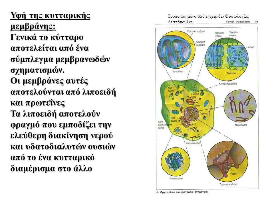 Υφή της κυτταρικής μεμβράνης: Γενικά το κύτταρο αποτελείται από ένα σύμπλεγμα μεμβρανωδών σχηματισμών.