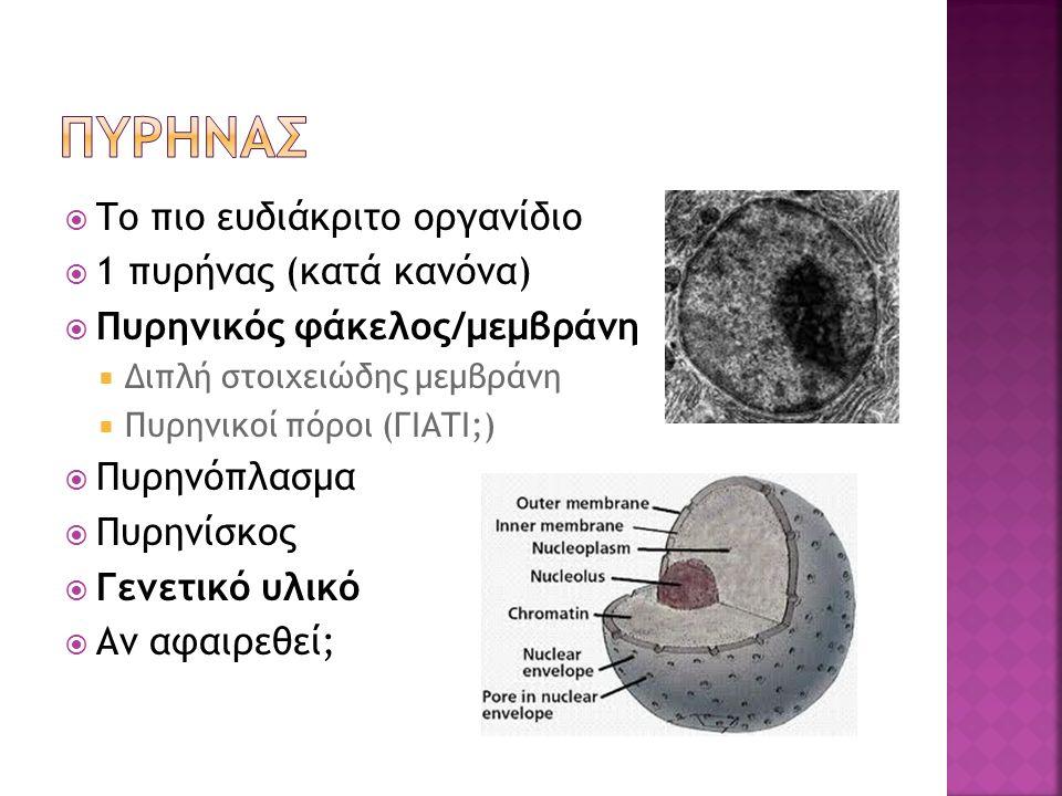  Το πιο ευδιάκριτο οργανίδιο  1 πυρήνας (κατά κανόνα)  Πυρηνικός φάκελος/μεμβράνη  Διπλή στοιχειώδης μεμβράνη  Πυρηνικοί πόροι (ΓΙΑΤΙ;)  Πυρηνόπλασμα  Πυρηνίσκος  Γενετικό υλικό  Αν αφαιρεθεί;