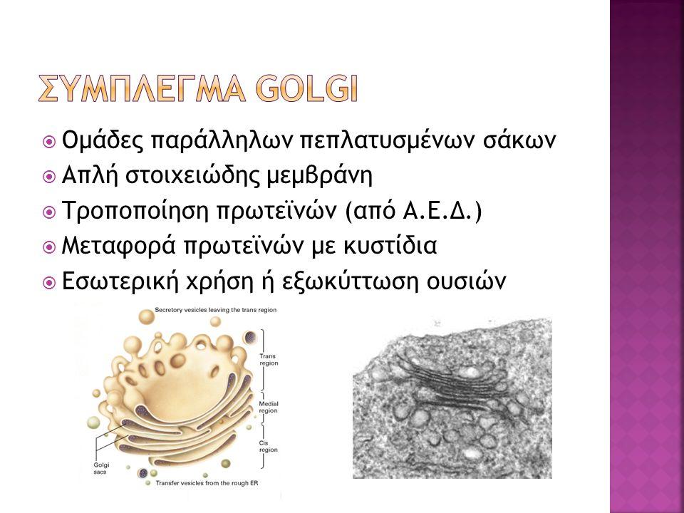  Ομάδες παράλληλων πεπλατυσμένων σάκων  Απλή στοιχειώδης μεμβράνη  Τροποποίηση πρωτεϊνών (από Α.Ε.Δ.)  Μεταφορά πρωτεϊνών με κυστίδια  Εσωτερική χρήση ή εξωκύττωση ουσιών