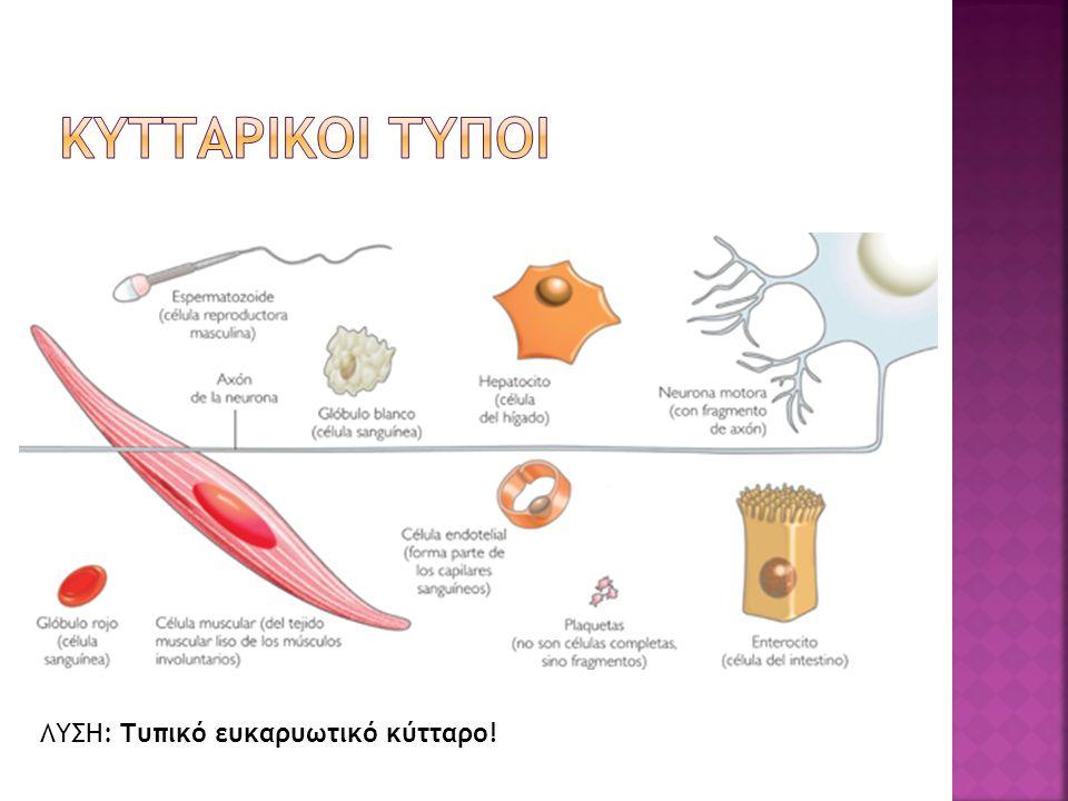 ΛΥΣΗ: Τυπικό ευκαρυωτικό κύτταρο!
