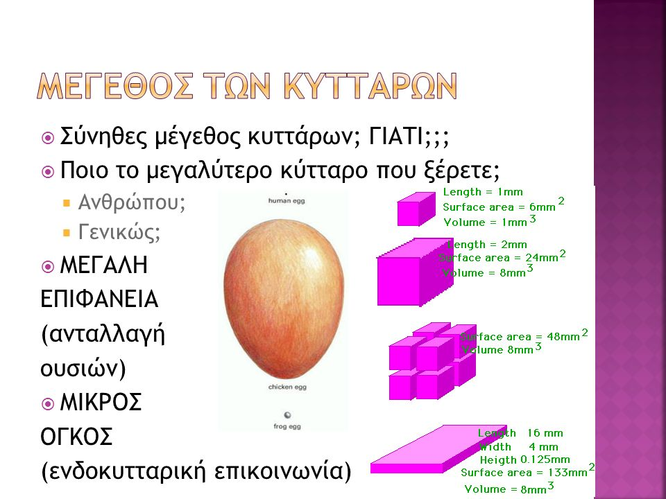  Σύνηθες μέγεθος κυττάρων; ΓΙΑΤΙ;;;  Ποιο το μεγαλύτερο κύτταρο που ξέρετε;  Ανθρώπου;  Γενικώς;  ΜΕΓΑΛΗ ΕΠΙΦΑΝΕΙΑ (ανταλλαγή ουσιών)  ΜΙΚΡΟΣ ΟΓΚΟΣ (ενδοκυτταρική επικοινωνία)