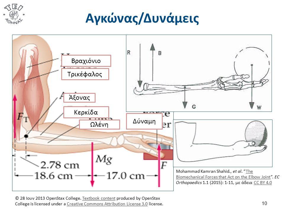 Αγκώνας/Δυνάμεις 10 Βραχιόνιο Τρικέφαλος Άξονας Κερκίδα Ωλένη Δύναμη © 28 Ιουν 2013 OpenStax College.