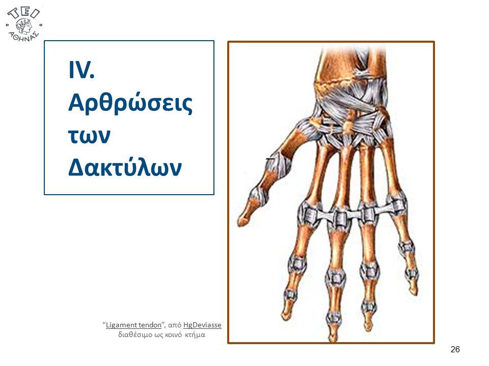 "IV. Αρθρώσεις των Δακτύλων 26 ""Ligament tendon"", από HgDeviasse διαθέσιμο ως κοινό κτήμαLigament tendonHgDeviasse"
