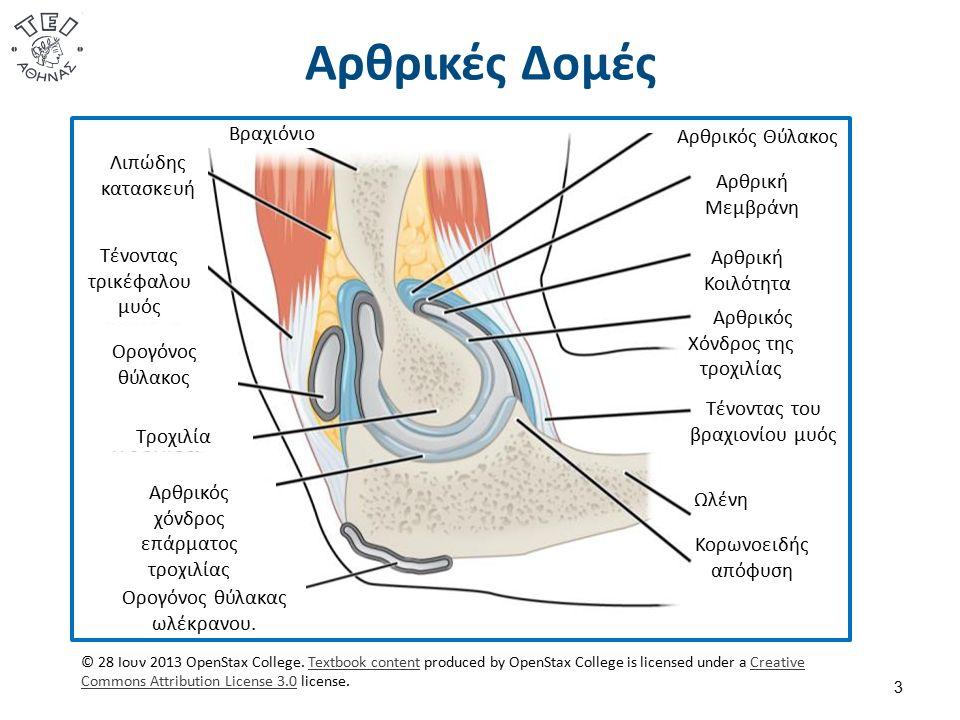 Αρθρικές Δομές 3 Αρθρικός Θύλακος Αρθρική Μεμβράνη Αρθρική Κοιλότητα Αρθρικός Χόνδρος της τροχιλίας Τένοντας του βραχιονίου μυός Ωλένη Κορωνοειδής απόφυση Λιπώδης κατασκευή Τένοντας τρικέφαλου μυός Τροχιλία Ορογόνος θύλακος Αρθρικός χόνδρος επάρματος τροχιλίας Ορογόνος θύλακας ωλέκρανου.