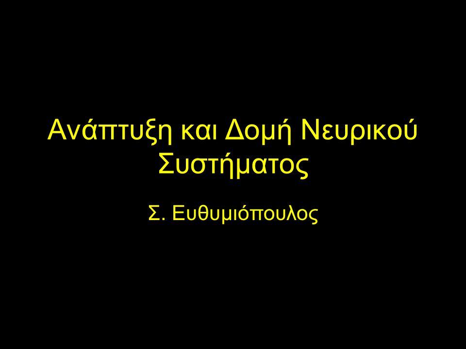 Ανάπτυξη και Δομή Νευρικού Συστήματος Σ. Ευθυμιόπουλος