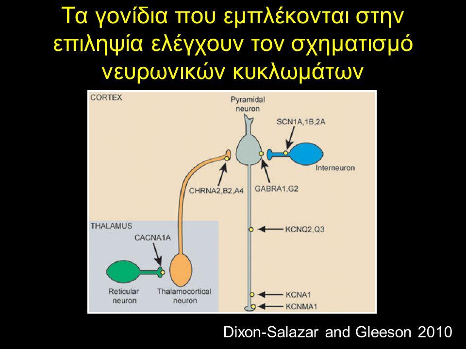 Τα γονίδια που εμπλέκονται στην επιληψία ελέγχουν τον σχηματισμό νευρωνικών κυκλωμάτων Dixon-Salazar and Gleeson 2010