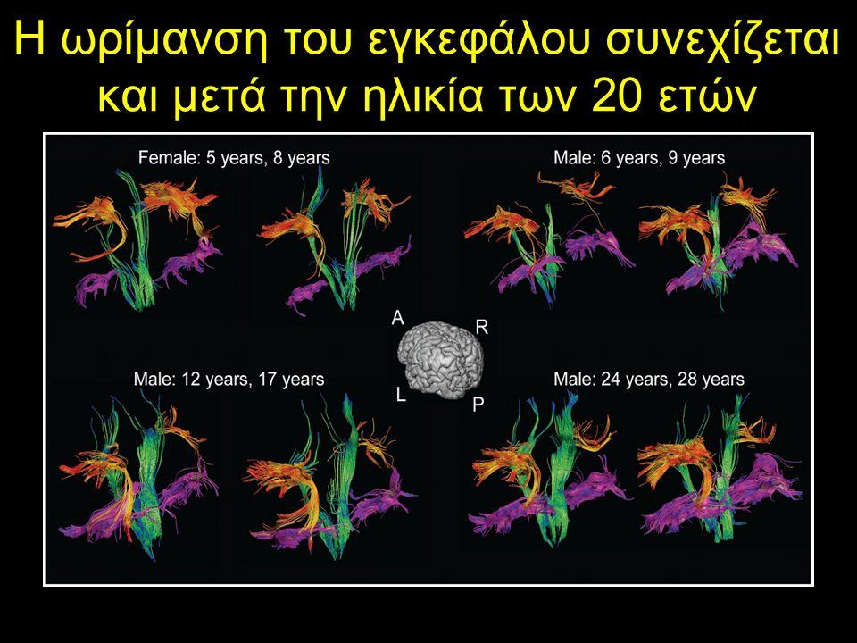 Η ωρίμανση του εγκεφάλου συνεχίζεται και μετά την ηλικία των 20 ετών Lebel 2011