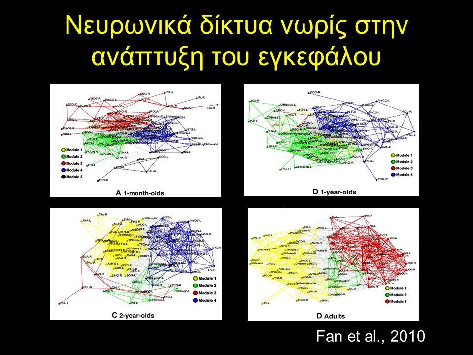 Νευρωνικά δίκτυα νωρίς στην ανάπτυξη του εγκεφάλου Fan et al., 2010