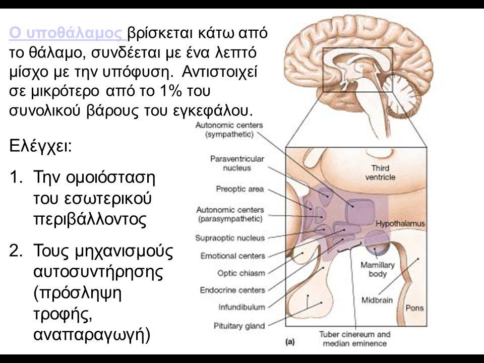 Ο υποθάλαμος Ο υποθάλαμος βρίσκεται κάτω από το θάλαμο, συνδέεται με ένα λεπτό μίσχο με την υπόφυση. Αντιστοιχεί σε μικρότερο από το 1% του συνολικού