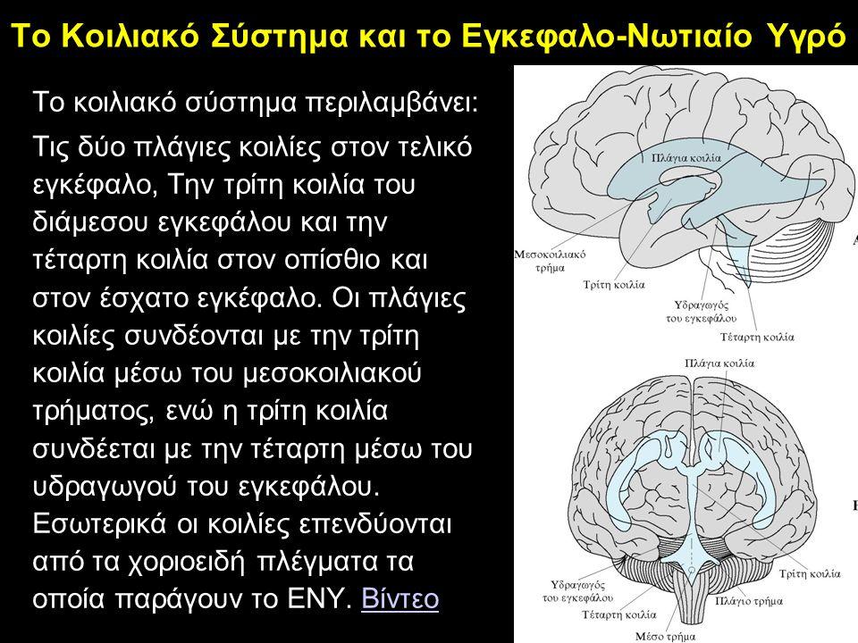 Το Κοιλιακό Σύστημα και το Εγκεφαλο-Νωτιαίο Υγρό Tο κοιλιακό σύστημα περιλαμβάνει: Τις δύο πλάγιες κοιλίες στον τελικό εγκέφαλο, Την τρίτη κοιλία του