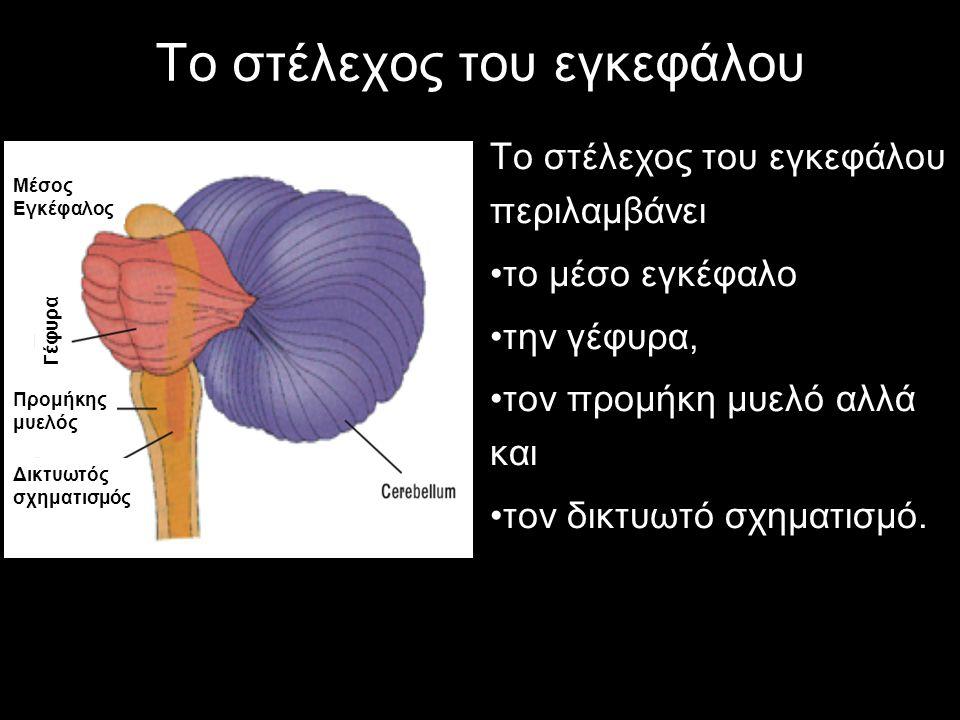 Το στέλεχος του εγκεφάλου Το στέλεχος του εγκεφάλου περιλαμβάνει το μέσο εγκέφαλο την γέφυρα, τον προμήκη μυελό αλλά και τον δικτυωτό σχηματισμό.